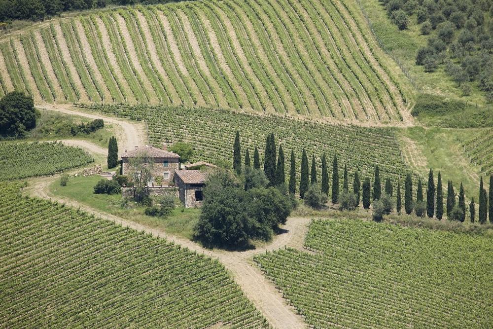 Castello di Meleto, Vigna Casi